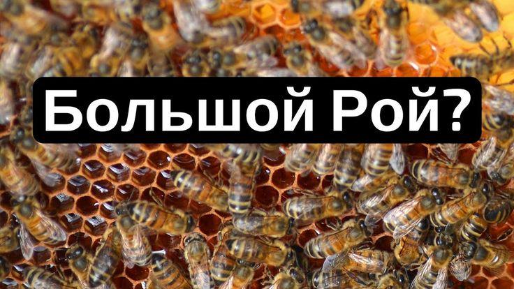 Что делать, если ваш пчелиный улей становится большим и роется? (Russian...