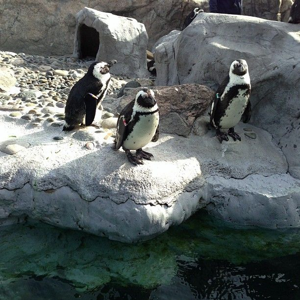 Mystic Aquarium.  Me,Tina and the kids visited.  Very nice and everyone loved the penguins!