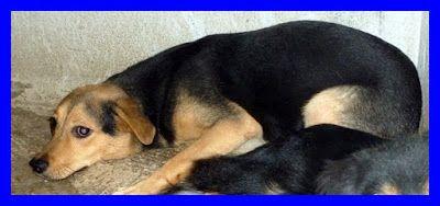 """UNTESORODICANE. ADOTTA  IL TUO AMORE, TI SARA' RICONOSCENTE A VITA!: LEX, povero cucciolone...è sempre stato il """"cane di nessuno"""" http://untesorodicane.blogspot.it/2012/11/lex-povero-cucciolonee-sempre-stato-il.html"""