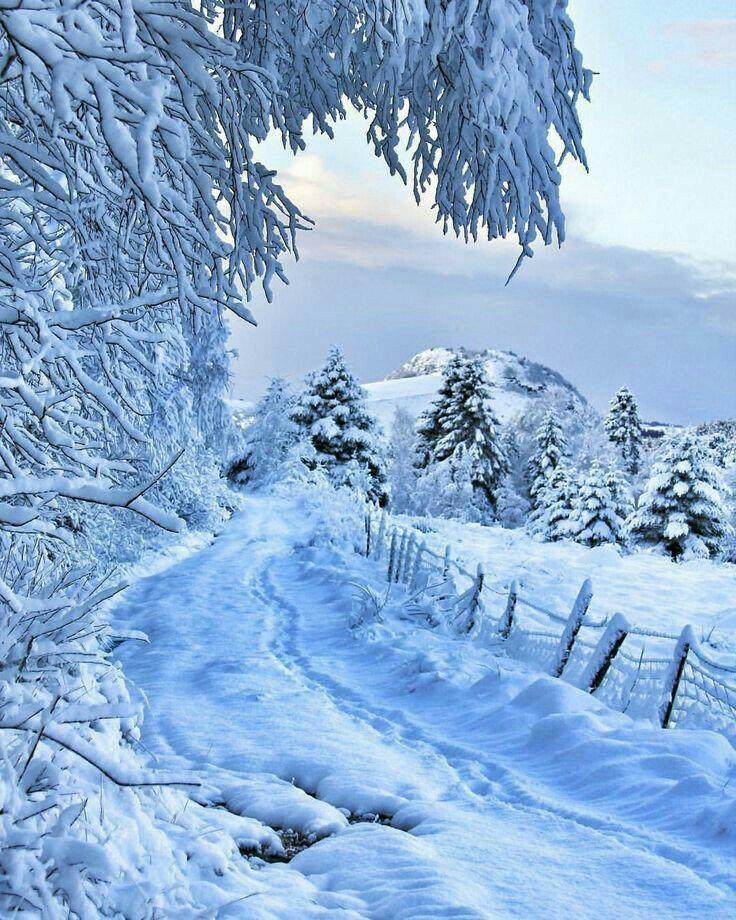 Картинки природа зимняя на телефон