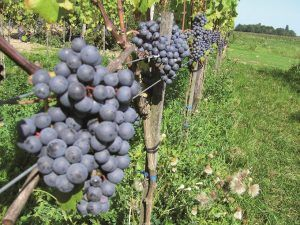 Wijngoed Montferland Munsterweg | Montferland Online