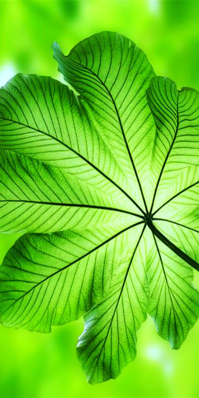 green leaf bokah