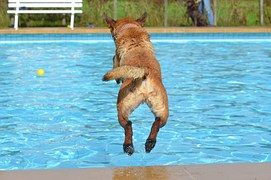 Everyone will look forward to cooling down in your sparkling-clean pool - even the family dog!  HTH and Blu-52 pool cleaner will keep you on the right track. Visit www.checkers.co.za
