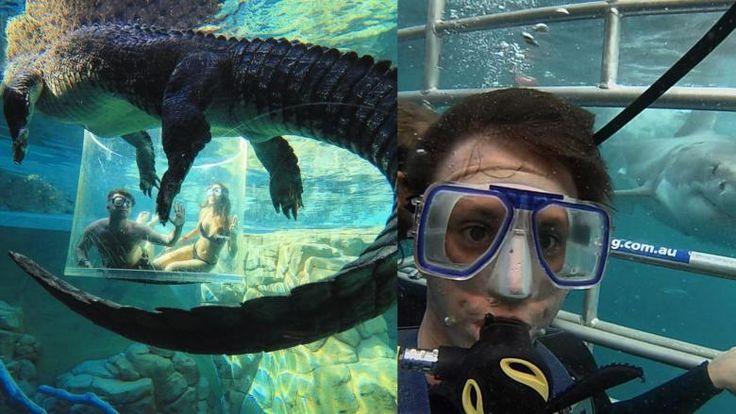 """Avustralya'da Kesinlikle Denenmesi Gereken Fazla Adrenalin Dolu ve Tüyler Ürpertici 23 Etkinlik """"Avustralya'da Kesinlikle Denenmesi Gereken Fazla Adrenalin Dolu ve Tüyler Ürpertici 23 Etkinlik""""  https://yoogbe.com/keyif/avustralyada-kesinlikle-denenmesi-gereken-fazla-adrenalin-dolu-ve-tuyler-urpertici-23-etkinlik/"""
