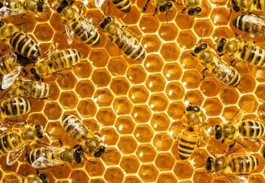 Η προστασία,αλλά κ η υγεία των μελισσών απασχολεί τελευταία,καθώς #κινδυνεύουν από #εξαφάνιση.Πως και γιατί διαβάστε http://fractalart.gr/melisses/
