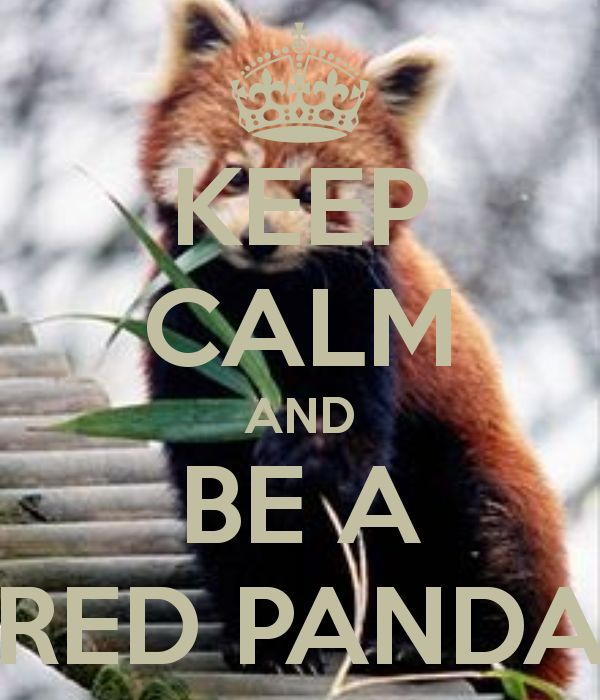 KEEP CALM AND BE A RED PANDA OMG just SO so for me !