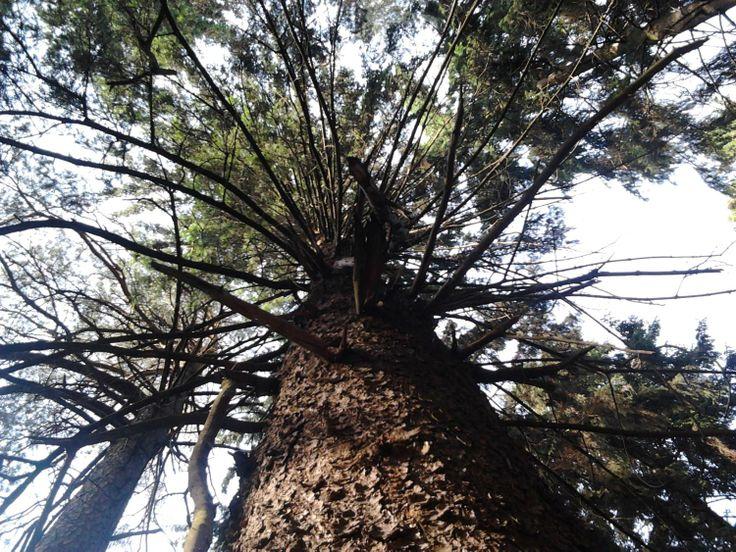 Drzewo od dołu - podlaskie. http://www.asib.pl