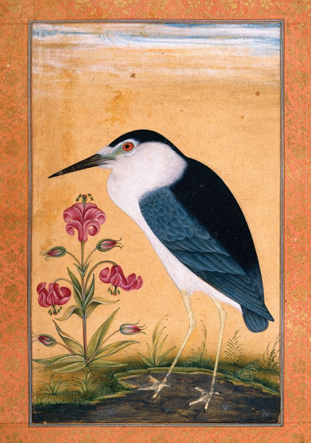 Birds From the Dara Shikoh Album