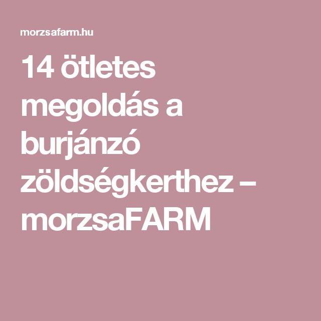 14 ötletes megoldás a burjánzó zöldségkerthez – morzsaFARM