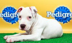 Puppy Bowl X Starting Lineup: Animal Planet  i look forward to this every year!