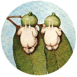 Childhood favourite - May Gibbs - Gumnut Babies