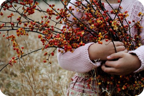 Bittersweet...favorite decoration to use in the Fall...