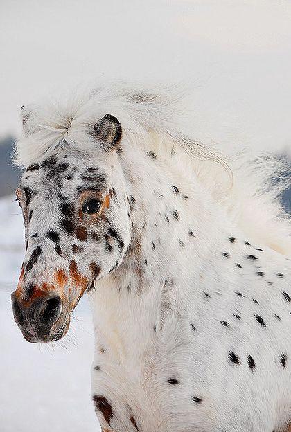 horses, animals, mammals,