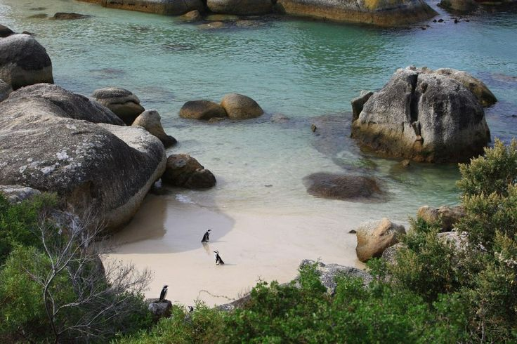 Self catering accommodation, Simon's Town, Cape Town   Bosky Dell is perfectly close to the beach. Perfect for Summer time!  http://www.capepointroute.co.za/moreinfoAccommodation.php?aID=423