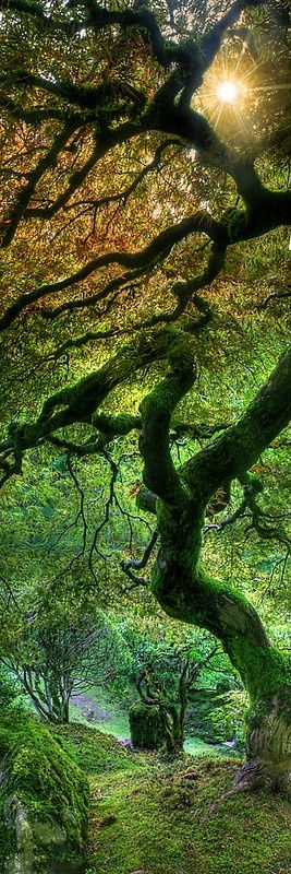 The Portland Japanese Garden is a 5.5-acre haven of tranquil beauty nestled in the scenic west hills of Portland, Oregon. - Pinned by The Mystic's Emporium on Etsy