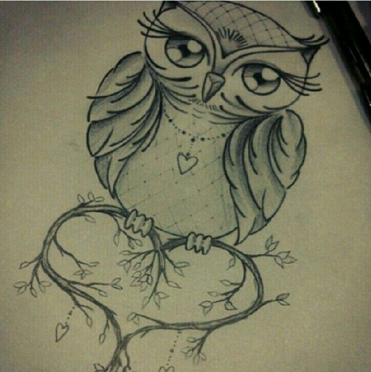 Owl                                                                                                                                                                                 More