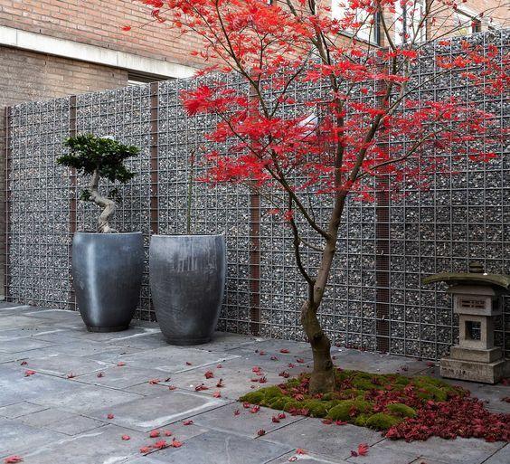 die besten 25 mediterrane pflanzen winterhart ideen auf pinterest rabattengestaltung. Black Bedroom Furniture Sets. Home Design Ideas