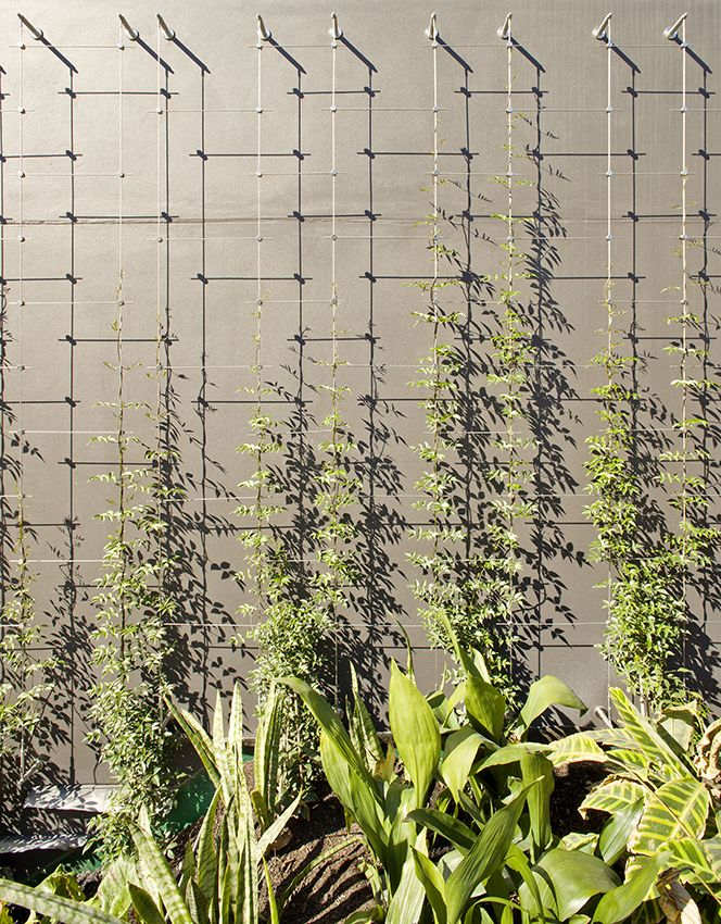 Cable Trellis | Tensile Design