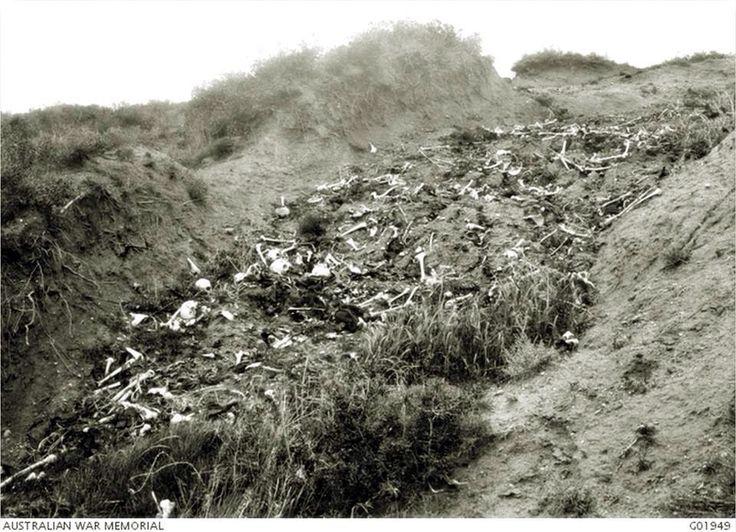 Bones of Fallen Turkish soldiers; south of ANZAC front