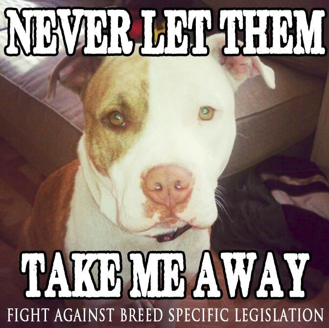 dangerous dogs and breed specific legislation Why we need breed-specific legislation in texas july 27th, 2011 current dog attack laws are inadequate to protect the public since the lillian stiles case occurred.