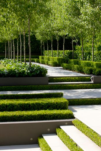 steps and box hedging