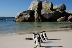 South Africa -   Fly-Drive Cape, Garden Route & Kruger