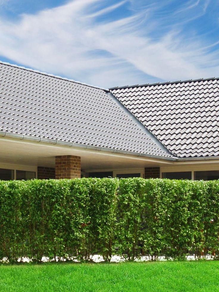 Färdig häck är en enormt tidsbesparande produkt som direkt skapar en rumskänsla i din trädgård. Det här är rätt val för dig som vill ha en stor häck på plats redan i år.