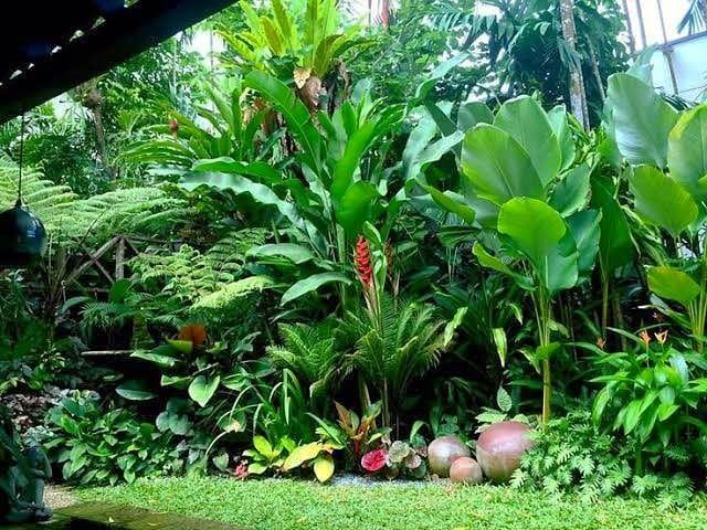 Bela composição de folhagens de verde intenso.  #garden #jardim #landscaping #paisagismo #tropicalgarden #jardimtropical #plants #plantas