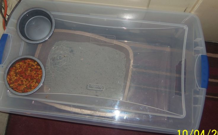 Keep cat litter off the floor cut a hole in the end of a clear container. can see when the box needs cleaned also feed them on top. I love this I wish I had done this sooner.
