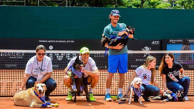 """Perros abandonados que """"trabajan"""" como recogepelotas en un partido de tenis"""