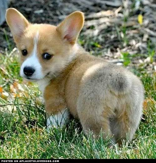 Top Ten Cutest Puppy Breeds | The Ultimate List • from APlaceToLoveDogs.com •