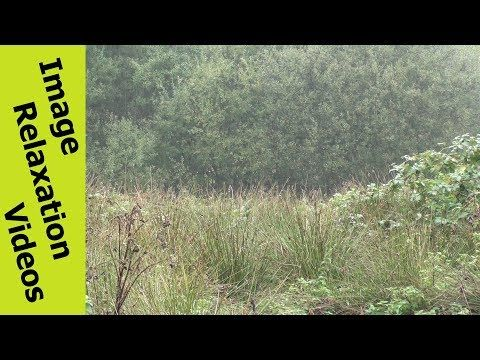 Gentle Rain In Forest Clearing – Gentle Rain Noise – Relaxing Music & Nature Sounds