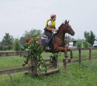 Geldings - Horse Breeders Ventasso