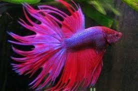 Resultado de imagem para peixes bonitos