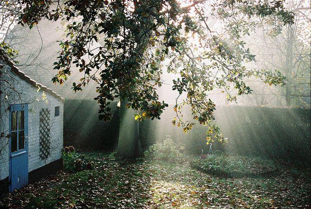 morning light by lightiswhatiwrite on Flickr.