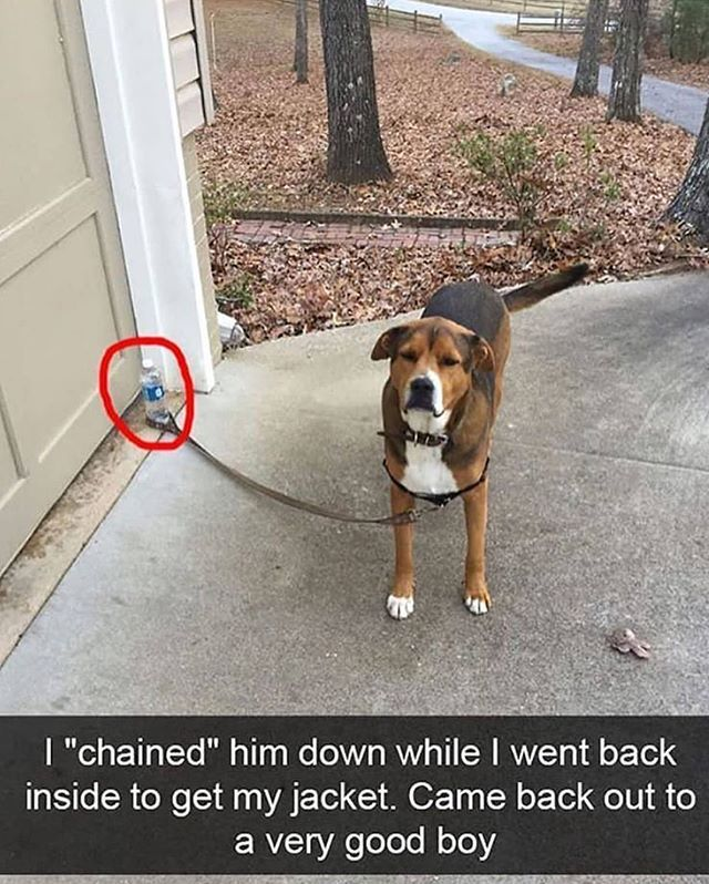 Websta X Social Butterfly X Follow Some Bull Ish For The Funniest Memes Funny Animals Funny Dog Videos Cute Funny Animals
