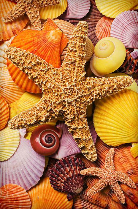 Starfish & Seashells