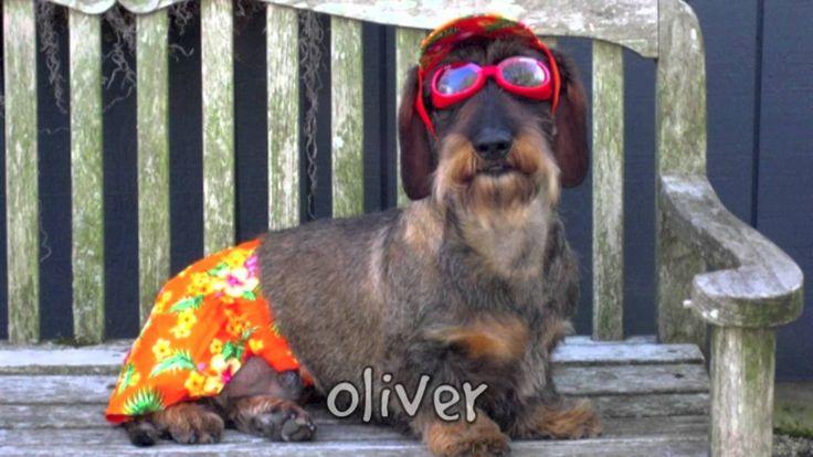 Dog Training Oliver Bc
