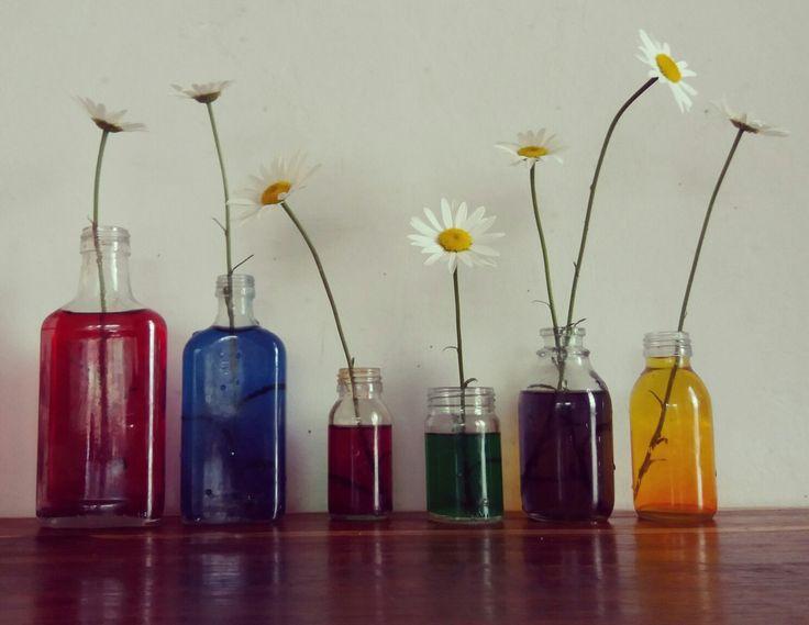 #Reenboog eksperimente met daisies