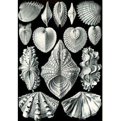 Evive Designs Vintage Seashells 'IV' by Julia Kearney Graphic Art Print – Angélina Cléret