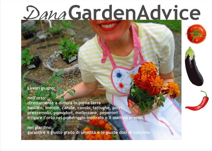 Dana Garden Design: Dana Garden Advice