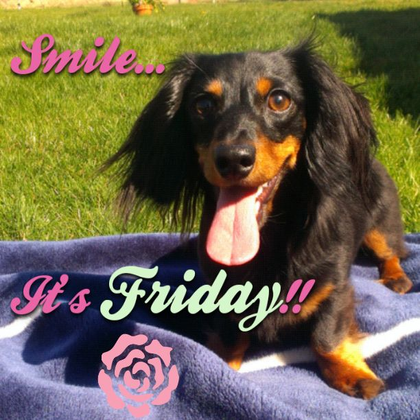 Image result for friday dachshund images