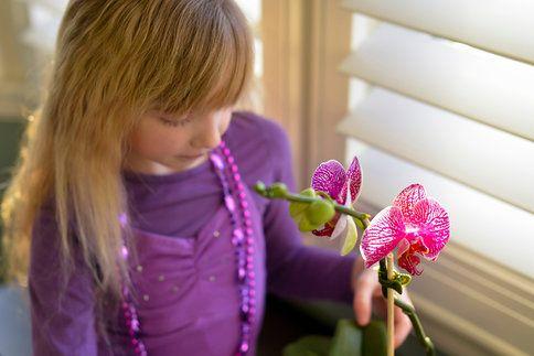 Orchideje jsou krásné, líbí se i dětem