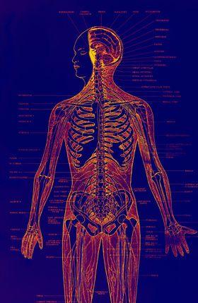 Intestinal Symptoms of Fibromyalgai