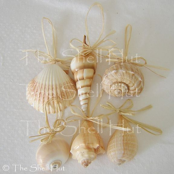 100 ideas to try about seaside cottage at christmas for Miniature tree decorated with sea shells