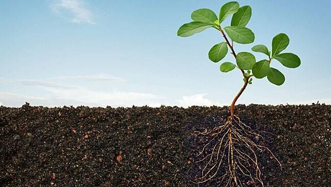 In 'The Soil Will Save Us,' author Kristin Ohlson explores the potential for reversing global warming through soil conservation.