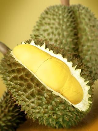"""Durian fruit: Native to Brunei, Malaysia, and Indonesia. Also known as the """"King of Fruits,"""" Durian has a very particular odor, a unique taste and is covered by a hard husk. Having a disagreeable smell, compared to skunk spray or sewage, the fruit is forbidden in hotels and public transportations in Southeast Asia. Still, the whole experience is worth it, since it's unforgettable. Most people have pretty strong opinions about this fruit. :)"""