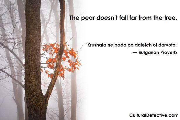 """Krushata ne pada po daletch ot darvoto"" #Bulgarian #Proverb #intercultural #unity #respect #team #global"
