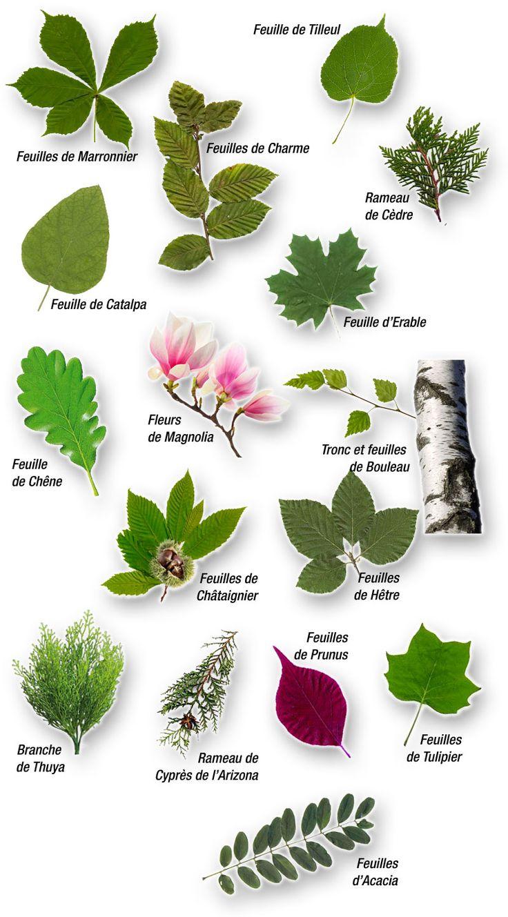 Identificar rboles a partir de las hojas naturaleza - Lista nombre arbustos ...