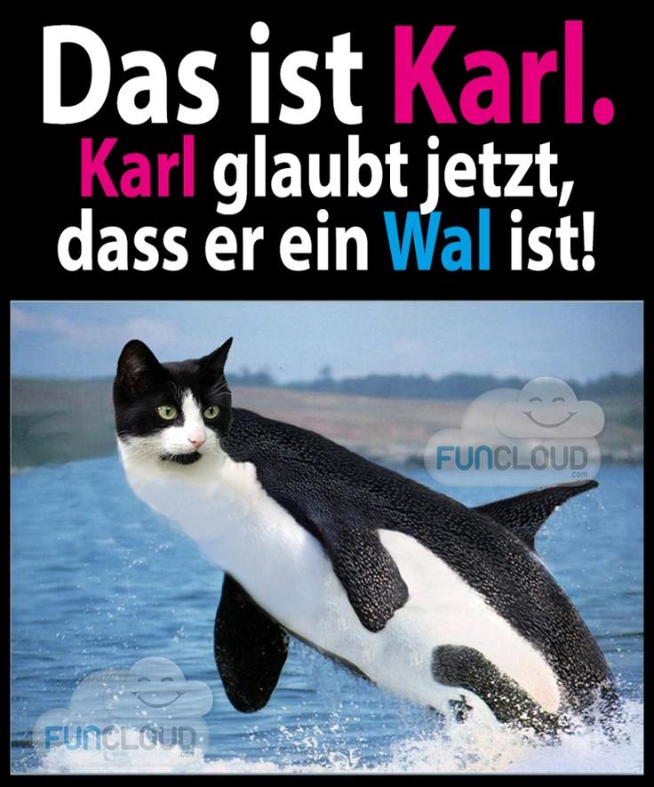 Das ist Karl. Karl glaubt jetzt, dass er ein Wal ist!
